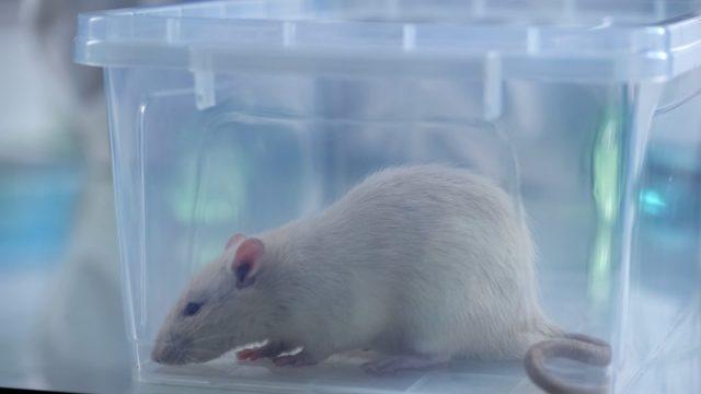 Startup Brasileira troca teste em animais por inteligência artificial